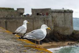Bretagne2015-0037.jpg