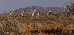 Namibië-0074_v1.jpg