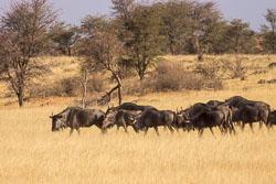 Namibië-0160_v1.jpg