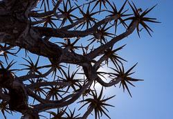 Namibië-0242_v1.jpg