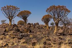 Namibië-0258_v1.jpg