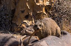 Namibië-0290_v1.jpg
