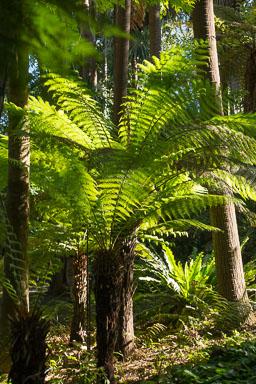 Australië_0060.jpg